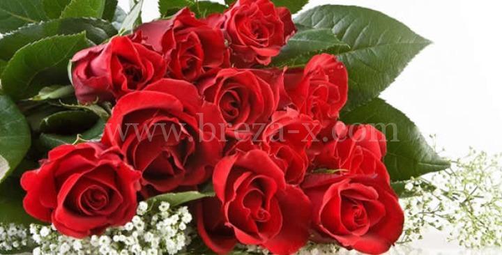 dan žena 8 mart čestitke Čestitka za 8. mart Dan žena | Breza X dan žena 8 mart čestitke